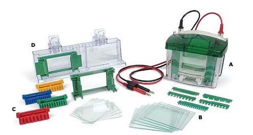 Bio-Rad 小垂直板电泳槽Mini-Protean Tetra Electrophoresis System